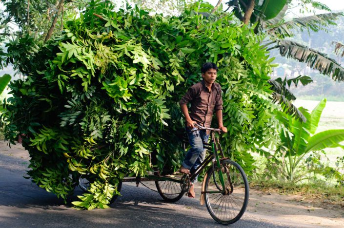 A cycle rickshaw is loaded up with branches and leaves in Bangladesh