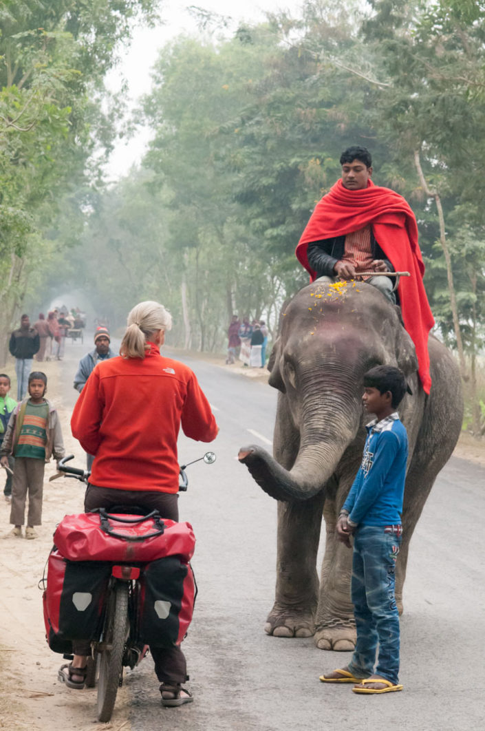 A touring bicyclist meets an elephant in Bangladesh.
