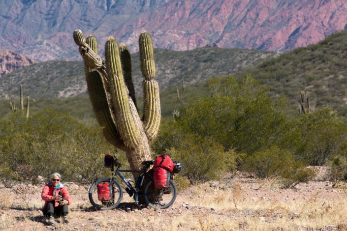 A fully loaded touring bicycle is leaned against a cactus in Argentina.