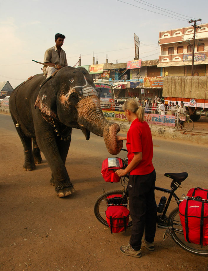 A touring bicyclist meets an elephant in South India.