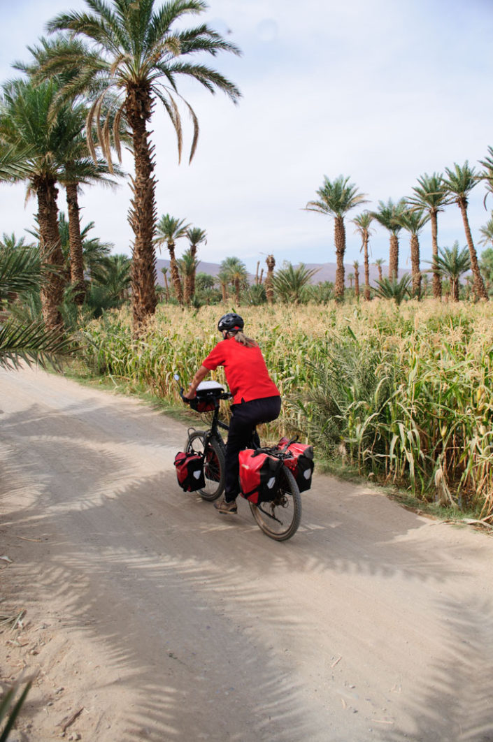 Acyclist pedals past palm trees in South Morocco