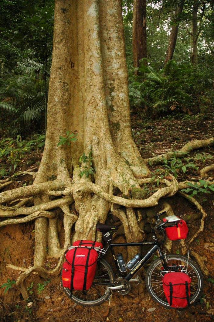 A touring bicycle is leaned against a tree in South India.